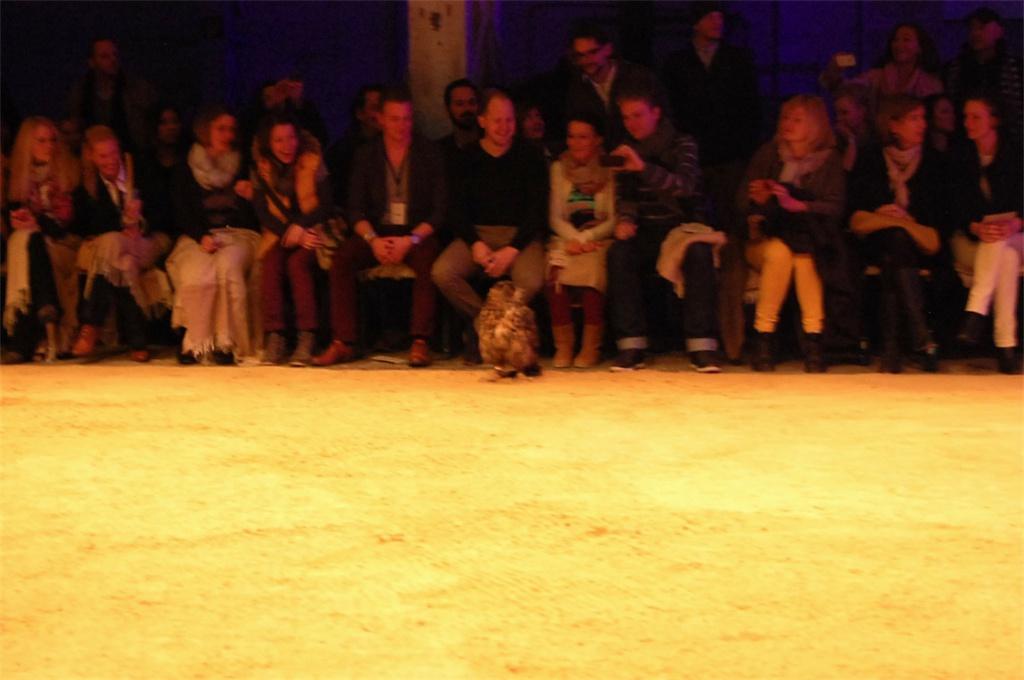 Camel Active Show - verwirrte Eule im Publikum